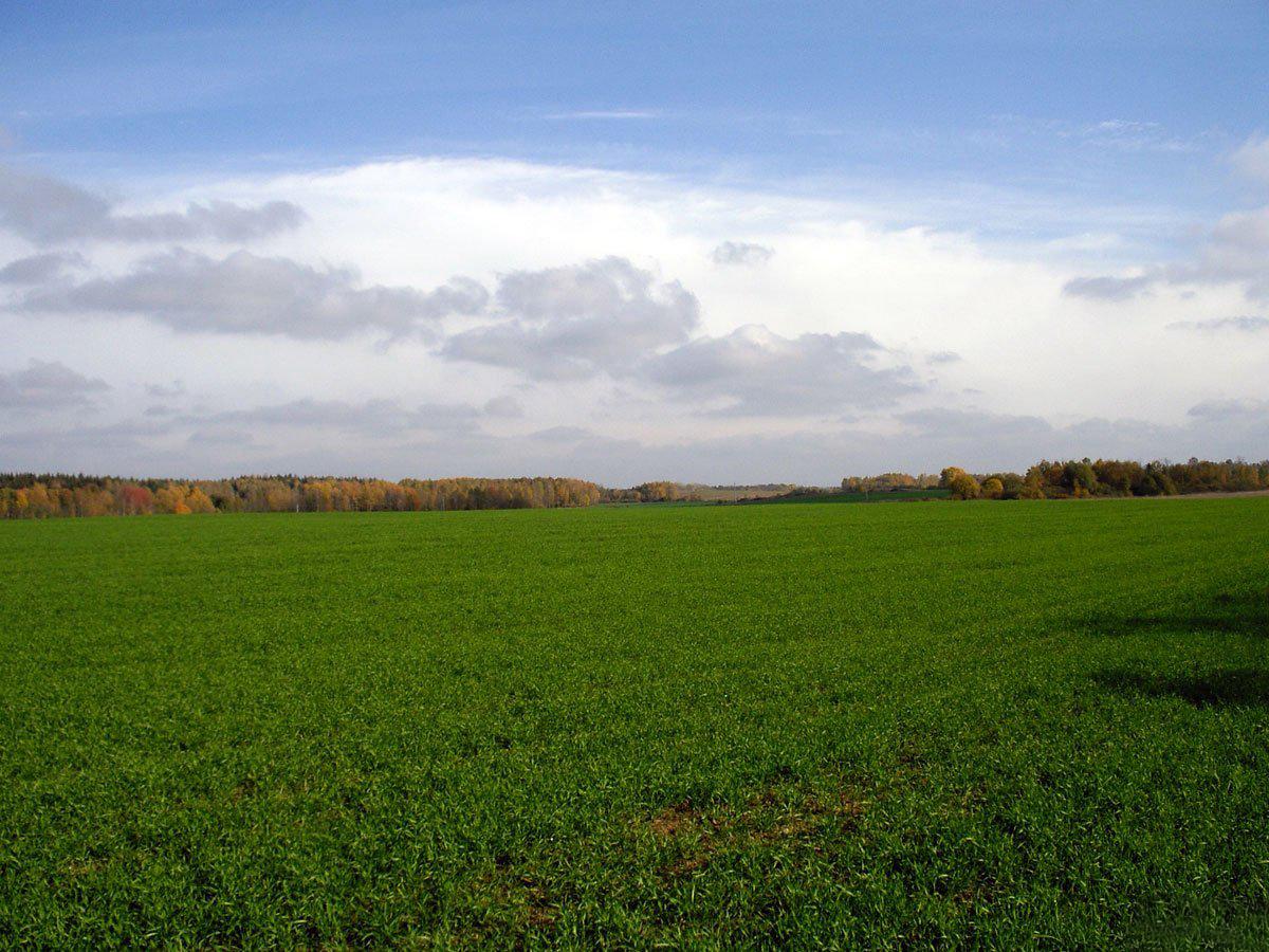 земельные паи продажа